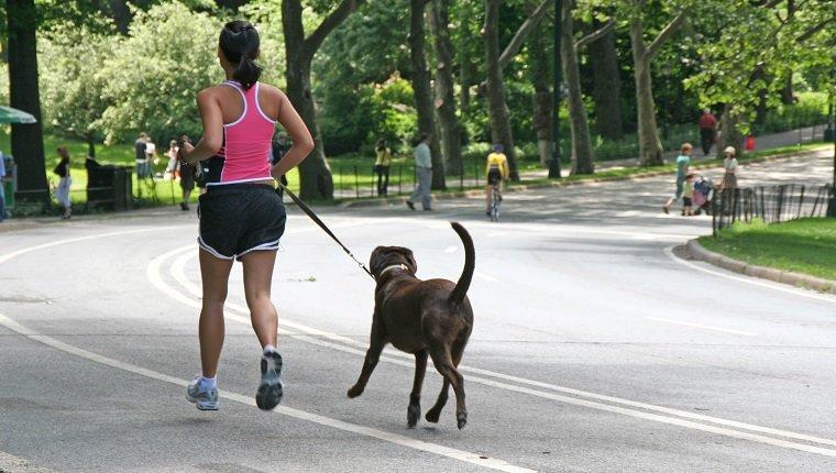 Junge Frau, die mit Hund im Central Park, New York joggt.