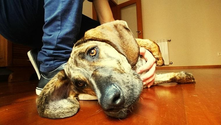 Vergiftung Bei Hunden