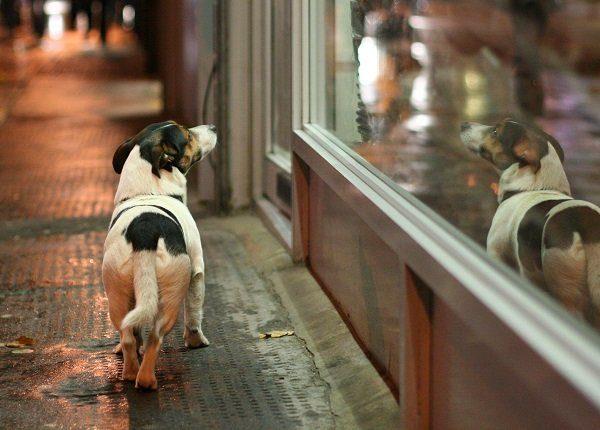 Dog reflecting on window glass