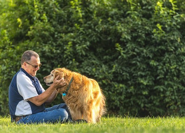 A middle aged Caucasian man sitting in the grass petting/rubbing the ears his deaf senior Golden Retriever as the dog give him a paw at sunset. This setting could be his back yard or at a public park.