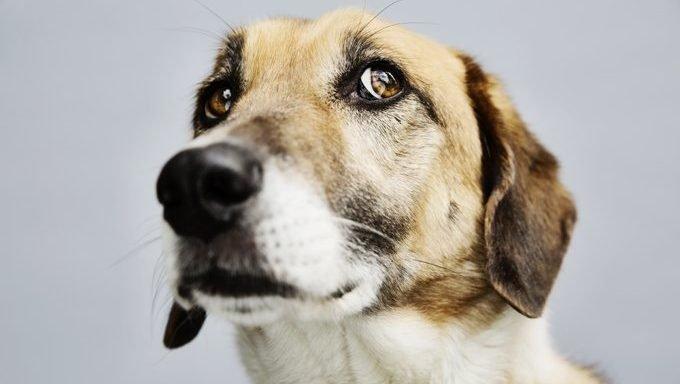 Hund sieht ängstlich aus