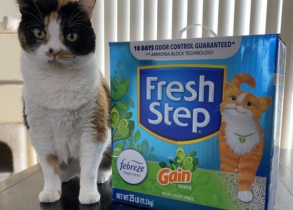 Pookie with Fresh Step cat litter