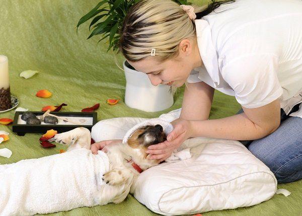 10 Traumjobs für Hundeliebhaber
