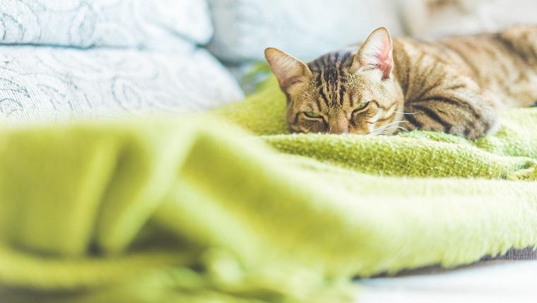 Eine faule Katze, die auf dem Sofa ruht