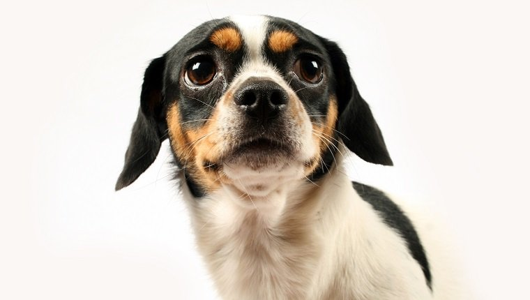 Hund mit traurigen Augen