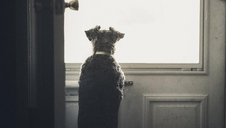 Kleiner Hund, der außerhalb durch Türfenster schaut