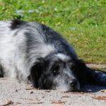 Sad Dog Lying On Footpath