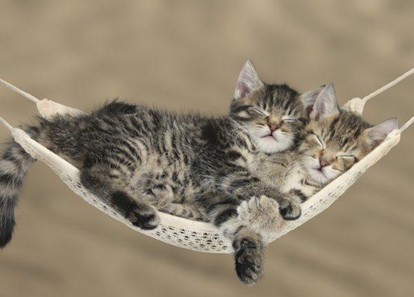 Kittens in hammock