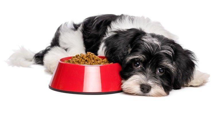 Gastritis bei Hunden: Symptome, Ursachen und Behandlungen ...