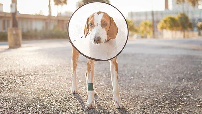 Pflegen Sie weniger adoptierbare Hunde