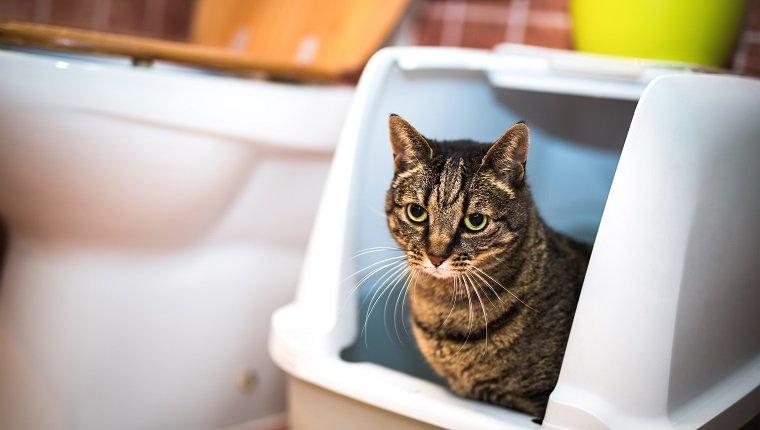Durchfall bei Katzen: Symptome, Ursachen und Behandlungen ...
