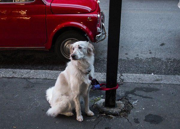 Dog Tied Up With Pole On Sidewalk