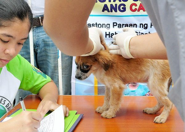 MANILA, PHILIPPINES - SEPTEMBER 28: Pet owners have their dogs vaccinated during World rabies Day celebrations on September 28, 2013 in Cainta Municipality, Philippines. World Rabies Day is an international campaign which is held on September 28th. Launched in 2007, World Rabies Day aims to raise awareness about the public health impact of human and animal rabies.