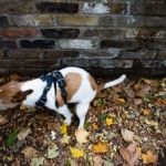 Dog owners can be fined if they fail to clear up after their dog