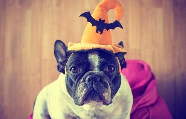 dog in halloween hat