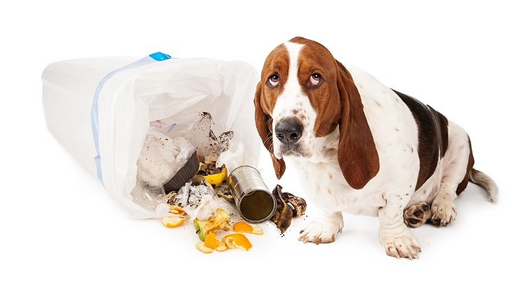 Kolitis bei Hunden: Symptome, Ursachen und Behandlungen ...