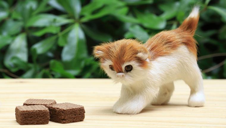 Schokolade Für Katzen