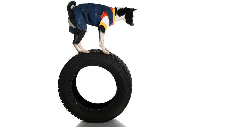 Der schickste Trick Ihres Hundes ist nicht annähernd das, was ein Werwolf kann