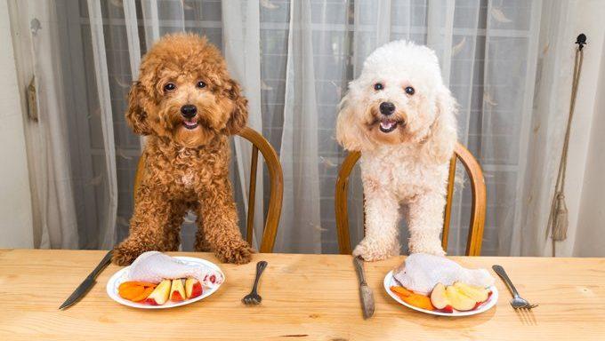 Hunde am Esstisch