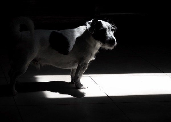 Dog In Darkroom At Home