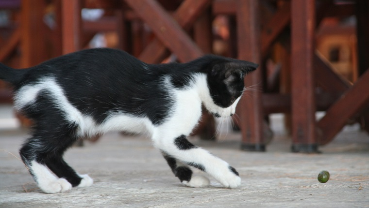 Katzen Oliven