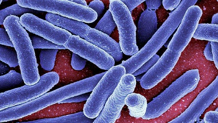 Niereninfektion bei Hunden: Symptome, Ursachen und