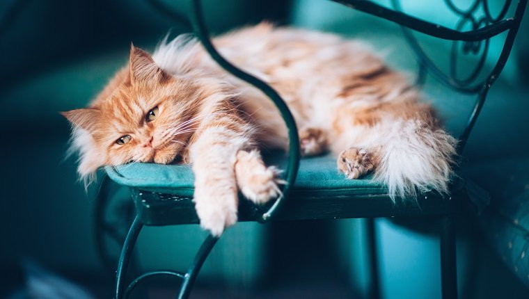Katzen Depression