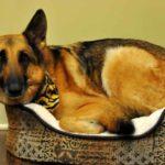 Dog Sleep Rituals