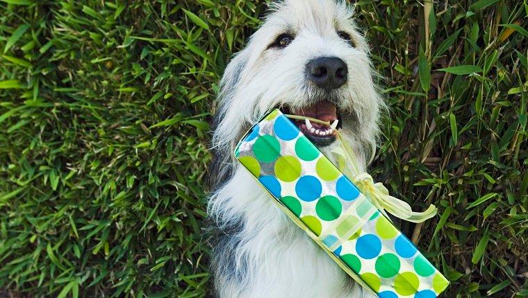 Hund mit Geschenk im Mund