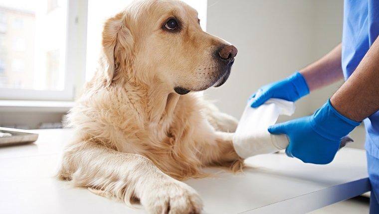 Thrombozytopenie bei Hunden: Symptome, Ursachen und ...