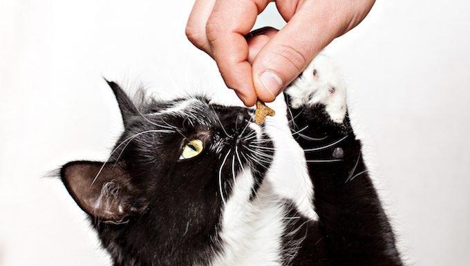 Was ist der beste Weg, um Ihre Katze mit Leckereien