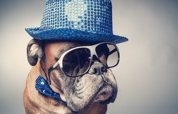 The creator of National Dress Up Your Pet Day stresses January 14th is not a day for humans to force pets to suffer humiliation or discomfort. (Picture Credit: Getty Images)