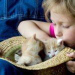 Kätzchen und was Sie erwartet: 5 wichtige Tipps für die Adoption