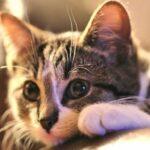 Cattime