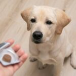 vet giving pill to obedient dog. tick and flea prevention for dog.