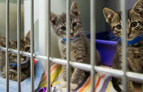 National Adopt A Shelter Pet Day: 6 Gründe, eine Katze aus einem Tierheim zu adoptieren