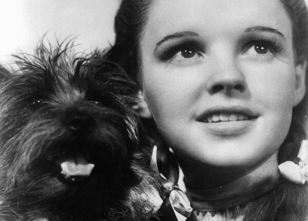 Judy Garland holding her dog Toto in a scene from the film