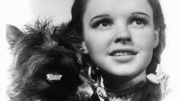 Judy Garland hält ihren Hund Toto in einer Szene aus dem Film 'Der Zauberer von Oz' von 1939. (Foto von Metro-Goldwyn-Mayer / Getty Images)