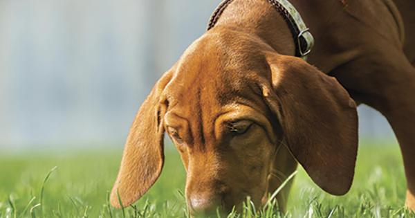 Warum fressen Hunde Kacke?