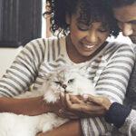 Wie werden Bandwürmer bei Katzen los?