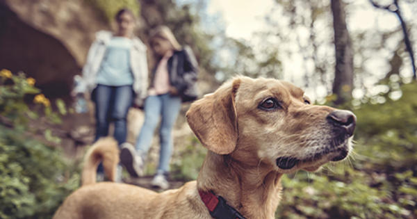 Können Hunde Farbe sehen und welche?