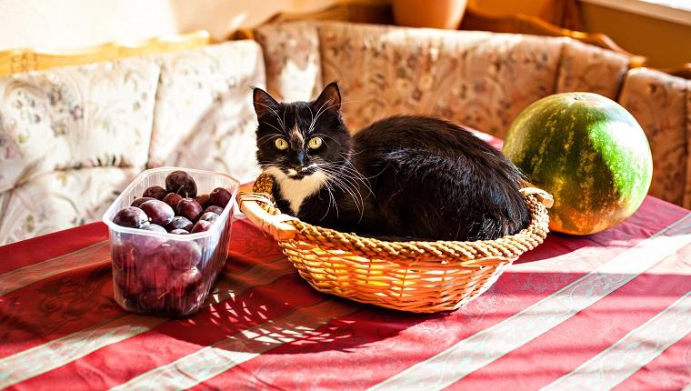 Lustige schwarzweiße Katze, die im Obstkorb liegt