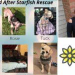 Sie können Welpen treffen und 'Soul Sisters' helfen, Spenden für 'Starfish Animal Rescue' zu sammeln: Treffen Sie Lori Hansen