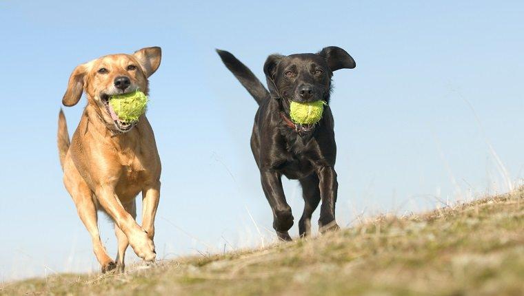 zwei sehr glückliche Hunde