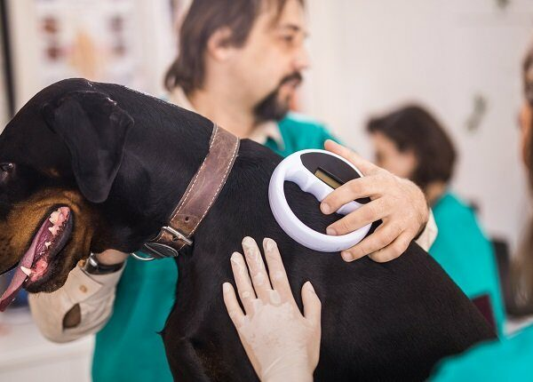 Veterinarians cooperating while scanning a dog