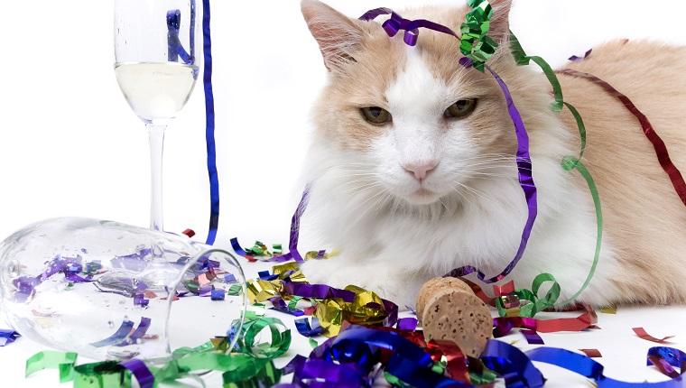 Silvester ist vorbei und nur noch die Katze