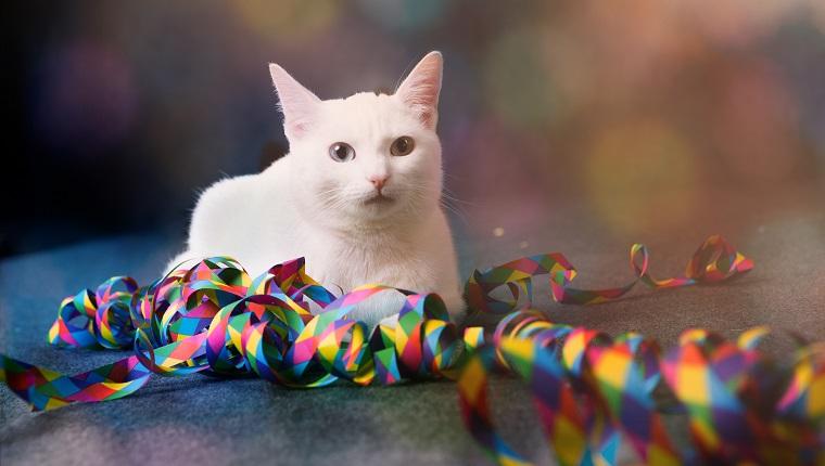weiße Katze sitzt neben bunten Papierschlangen, Vorderansicht
