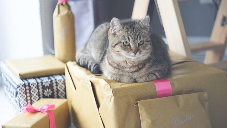 Hohe Betrachtungswinkel der Katze, die sich zu Hause auf Geschenkbox entspannt