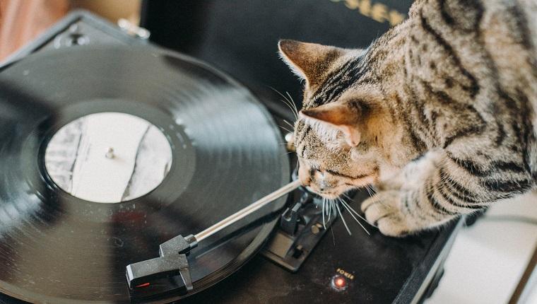 Nahaufnahme einer Katze mit Drehscheibe