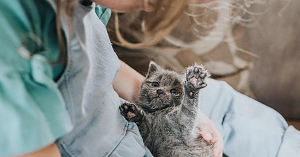 Wie man ein Kätzchen trainiert